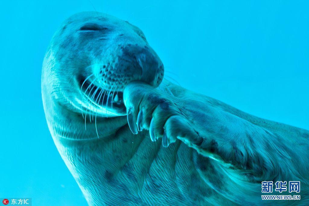 壁纸 动物 海洋动物 桌面 1024_683