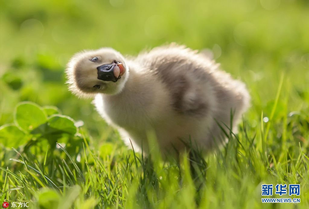 从可爱的小鸡小鸭到凶狠的野狗,polyushko总能捕捉到动物们最真实的
