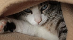 貓咪美國走失 3年半後現身加拿大