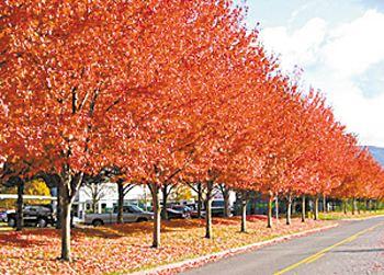 氣候變化致美樹種向西移