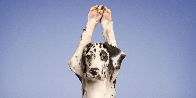 原來動物也是瑜伽界高手 這姿勢太銷魂!