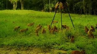 美國男子後院遭猴子大軍突襲