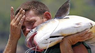 亞洲鯉魚成災 密歇根州懸賞70萬求妙招