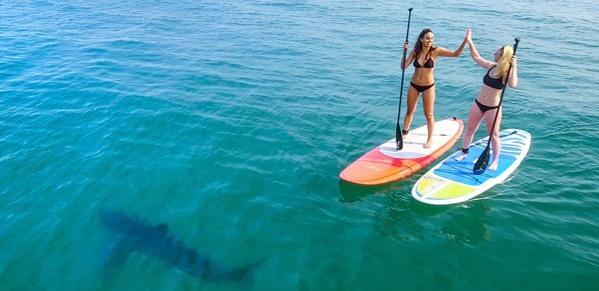 美國閨蜜玩浮板遇大鯊魚!淡定同遊毫不畏懼