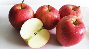 研究稱蘋果進化史離不開絲綢之路