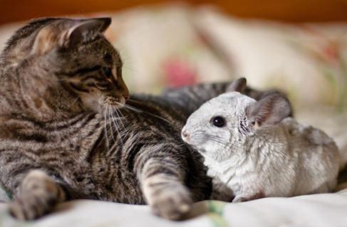活久見!這群小貓咪的看護居然是兩只老鼠