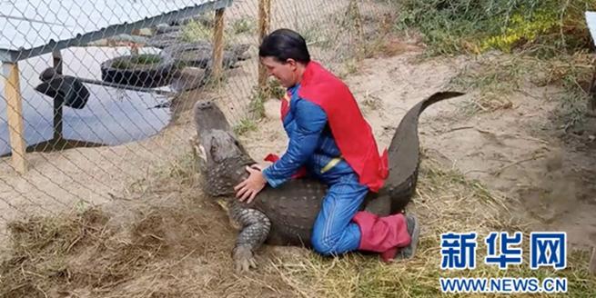 男子扮超人騎巨鱷 驚險畫面令人膽顫