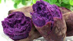 研究稱常吃紫薯或能預防結腸癌