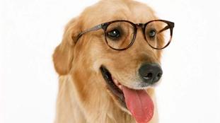 外國公司福利比拼:免費假期 上班帶狗