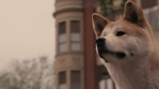 狗狗死後被做成標本 陪伴主人不再分開