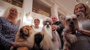 美國犬展舉行媒體預展 汪星人組團賣萌