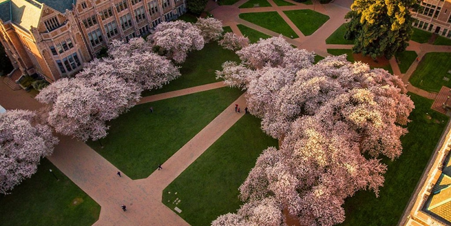 春天在這裏!波音工程師用大疆無人機航拍美大學櫻花勝景